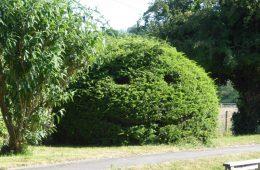 Topiary at Days Lock